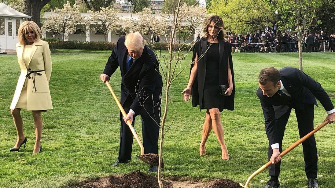 Macron's tree removed from White House lawn just days after his departure