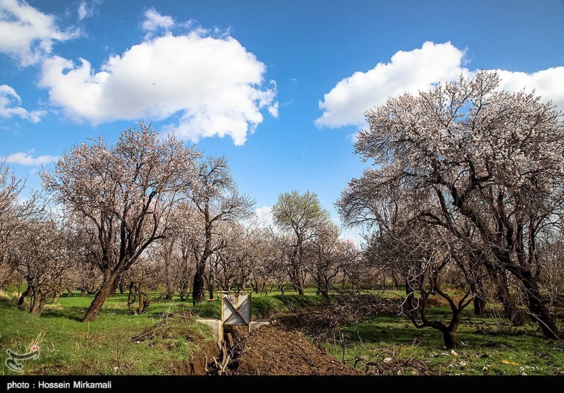 The Traditional Gardens; An Emerald in the Heart of Qazvin