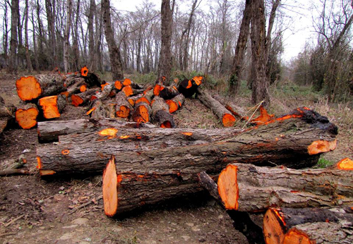 Serious Measures Required to Reverse Deforestation in Iran