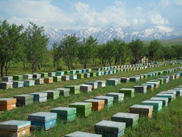 Iranian startup designs smart beehive